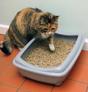Кошка около наполнителя с пеллетами